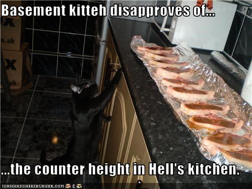 Basement kitteh disapproves of...  ...the counter height in Hell's kitchen.