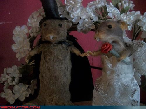 Quickest Way to Ruin a Wedding Cake: Taxidermied Topper