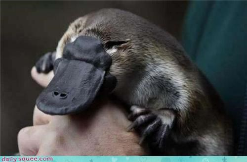 Rubbery Beak of Squee!