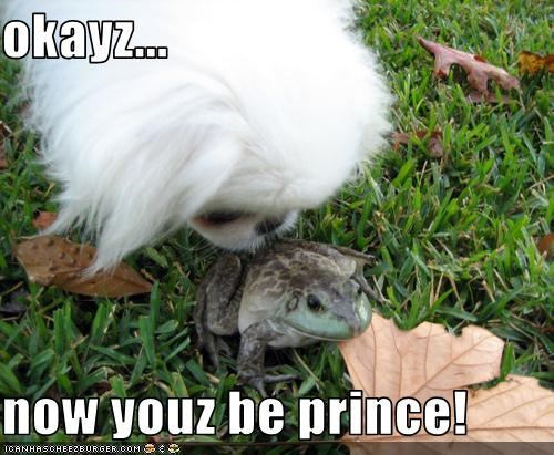 frog,KISS,outside,pekingese