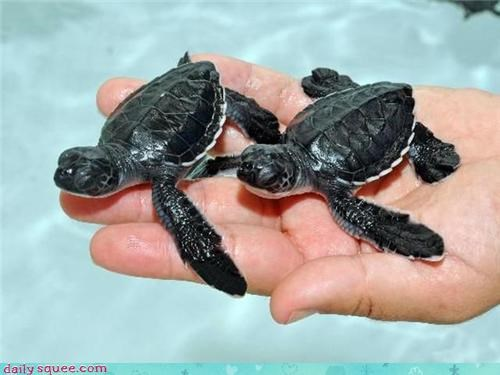 Two Turtles in the Hand...