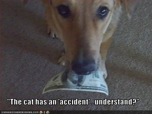 """The cat has an 'accident'...understand?"""