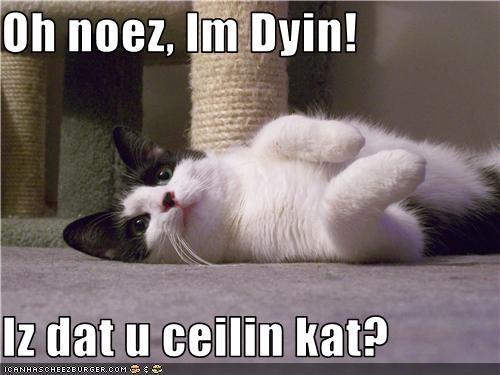 Oh noez, Im Dyin!  Iz dat u ceilin kat?