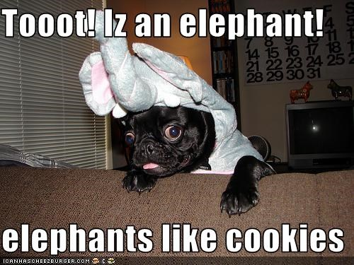 Tooot! Iz an elephant!  elephants like cookies