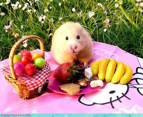 Cutest. Picnic. Ever.