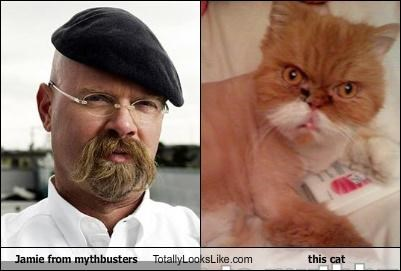 Jamie from mythbusters Totally Looks Like this cat