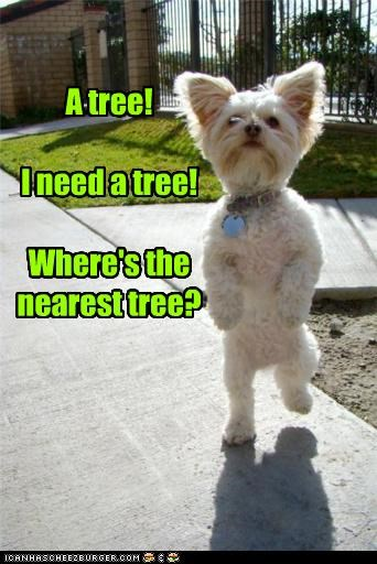 A tree!  I need a tree!  Where's the nearest tree?
