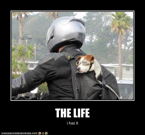 backpack,goggles,jack russel terrier,motorcycle,passenger,ride