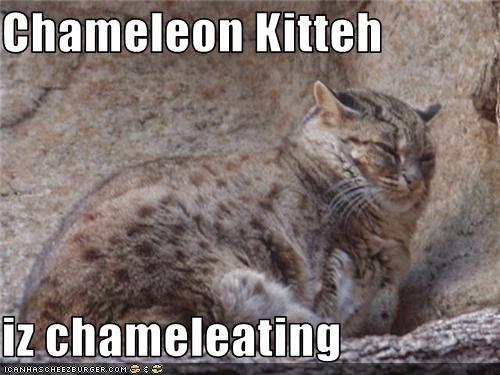 camouflage,chameleon