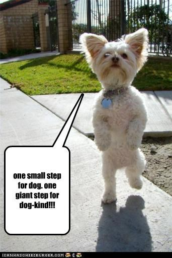 one small step for dog. one giant step for dog-kind!!!