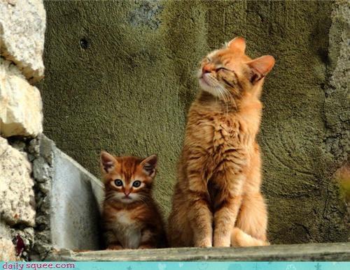 dad,kitten,son
