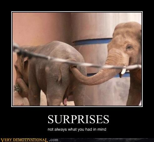 anal,animals,elephants,smelly,surprise,Terrifying