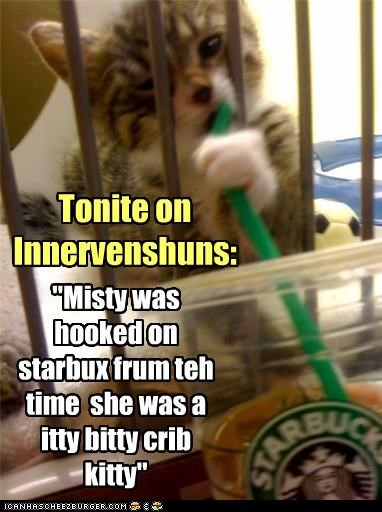 """Misty was hooked on starbux frum teh time  she was a itty bitty crib kitty"""