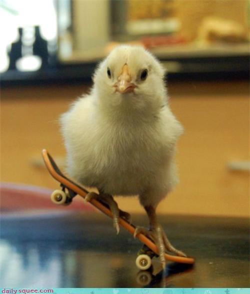 baby,chickc,chicken