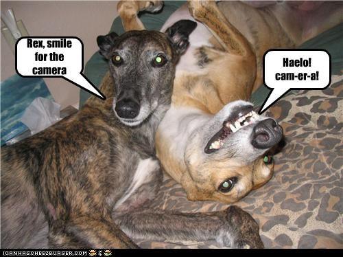 camera,italian greyhound,mixed breed,smile