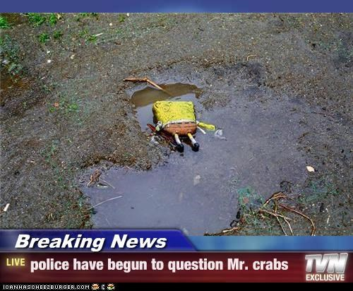 Breaking News - police have begun to question Mr. crabs