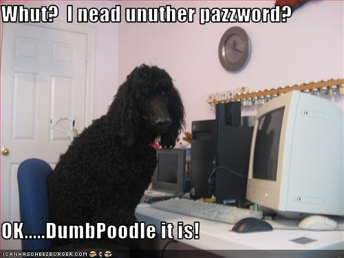 Whut?  I nead unuther pazzword?  OK.....DumbPoodle it is!
