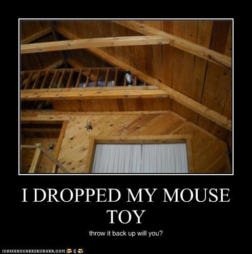 I DROPPED MY MOUSE TOY