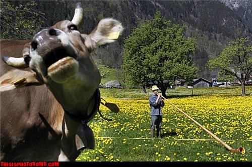 Animal Bomb,cow,disapproval,horns,Music,ricola