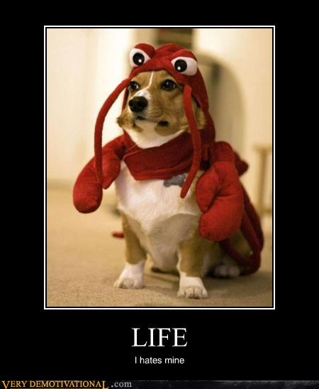 animal cruelty,corgi,costume,dogs,lobster,lol,Sad