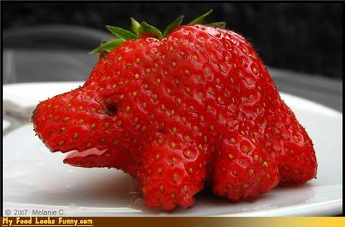 berries,dinosaurs,extinct,fruit,fruits-veggies,strawberry
