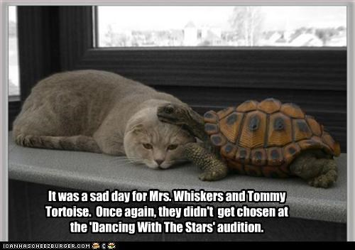 It was a sad day for Mrs. Whiskers and Tommy Tortoise.  Once again, they didn't  get chosen at the 'Dancing With The Stars' audition.