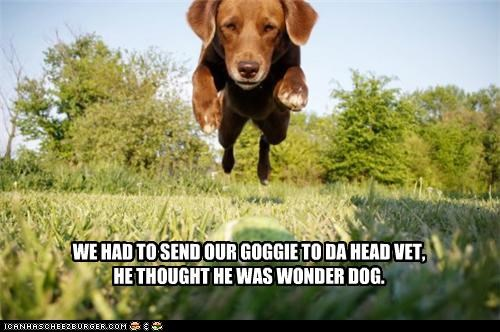 WE HAD TO SEND OUR GOGGIE TO DA HEAD VET, HE THOUGHT HE WAS WONDER DOG.