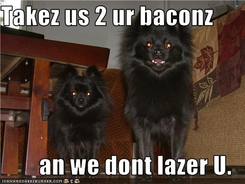 Takez us 2 ur baconz  an we dont lazer U.