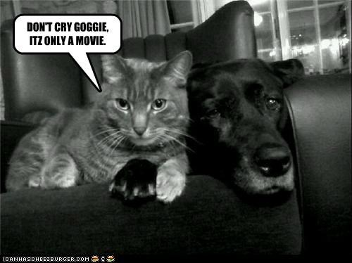 DON'T CRY GOGGIE, ITZ ONLY A MOVIE.