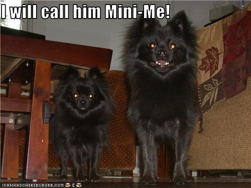 I will call him Mini-Me!
