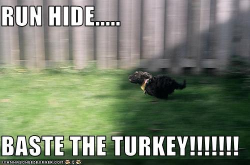 RUN HIDE.....  BASTE THE TURKEY!!!!!!!