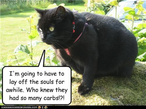 Basement Cat's diet plan.