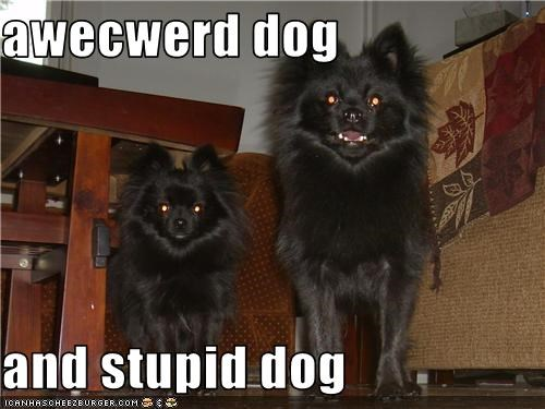 awecwerd dog  and stupid dog