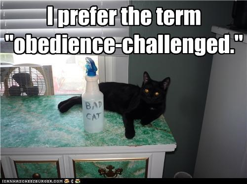 "I prefer the term ""obedience-challenged."""