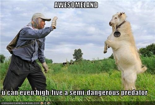 AWESOMELAND  u can even high-five a semi-dangerous predator