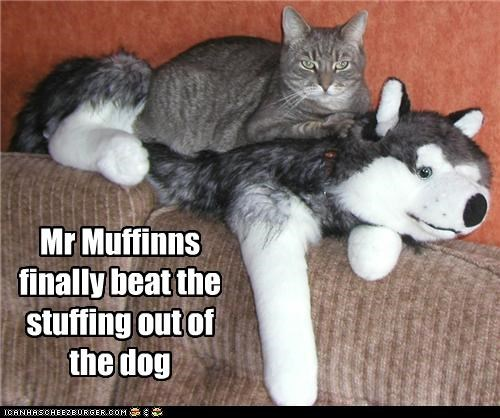 Mr Muffinns finally beat the stuffing out of the dog