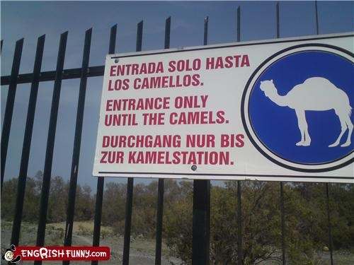 camels,do not,entrance,exit,sign