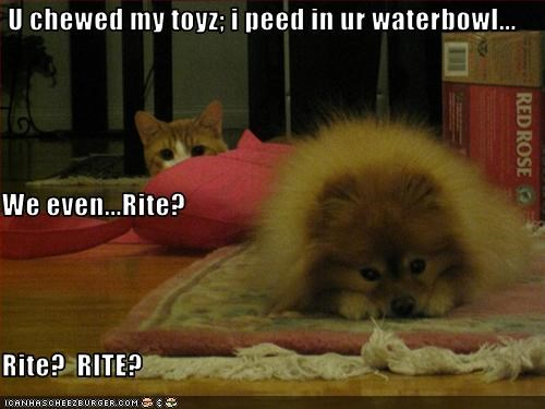 U chewed my toyz; i peed in ur waterbowl...  We even...Rite? Rite?  RITE?
