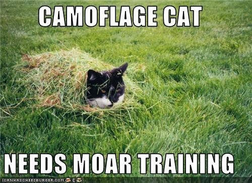 CAMOFLAGE CAT  NEEDS MOAR TRAINING