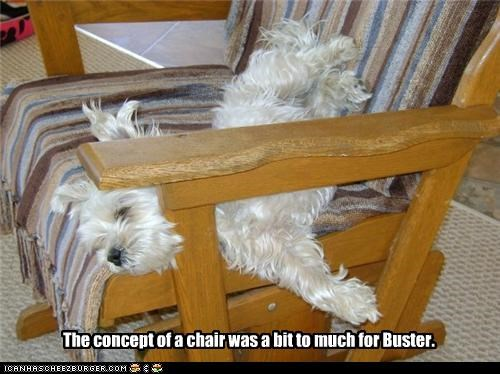 The concept of a chair was a bit to much for Buster.