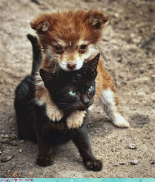 I Protect You Tiny Kitty