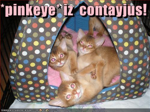 *pinkeye* iz  contayjus!