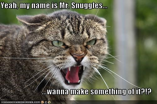 Yeah, my name is Mr. Snuggles...  ...wanna make something of it?!?