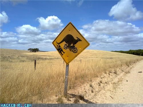 Those Crazy Kangaroos And Their Motorcycles