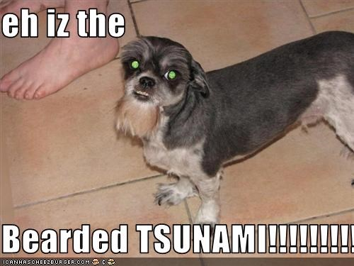 eh iz the  Bearded TSUNAMI!!!!!!!!!