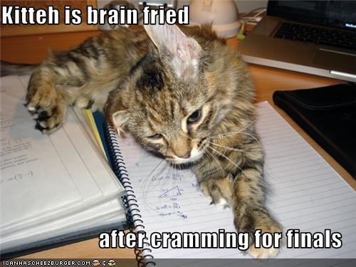 Kitteh is brain fried  after cramming for finals