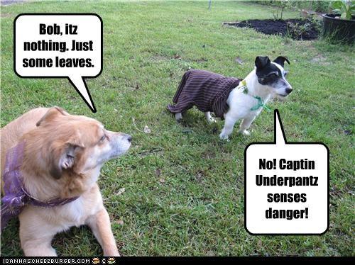 danger,golden retriever,Hall of Fame,jack russell terrier,outside,superhero,underwear