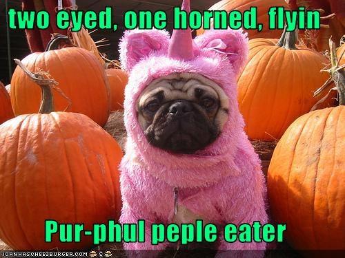 costume,halloween,one-eyed one-horned flying purple people eater,pug,pumpkins