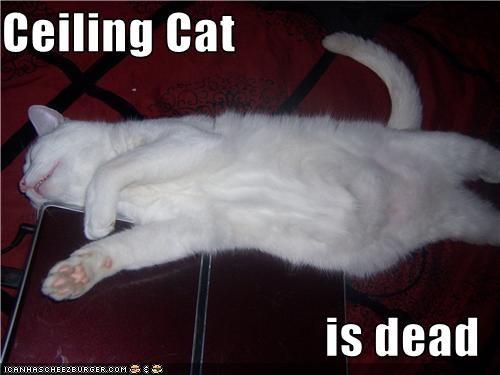 Ceiling Cat  is dead