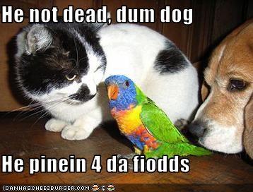 He not dead, dum dog  He pinein 4 da fiodds